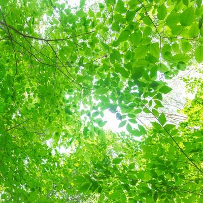 「夏の木漏れ日」の写真素材