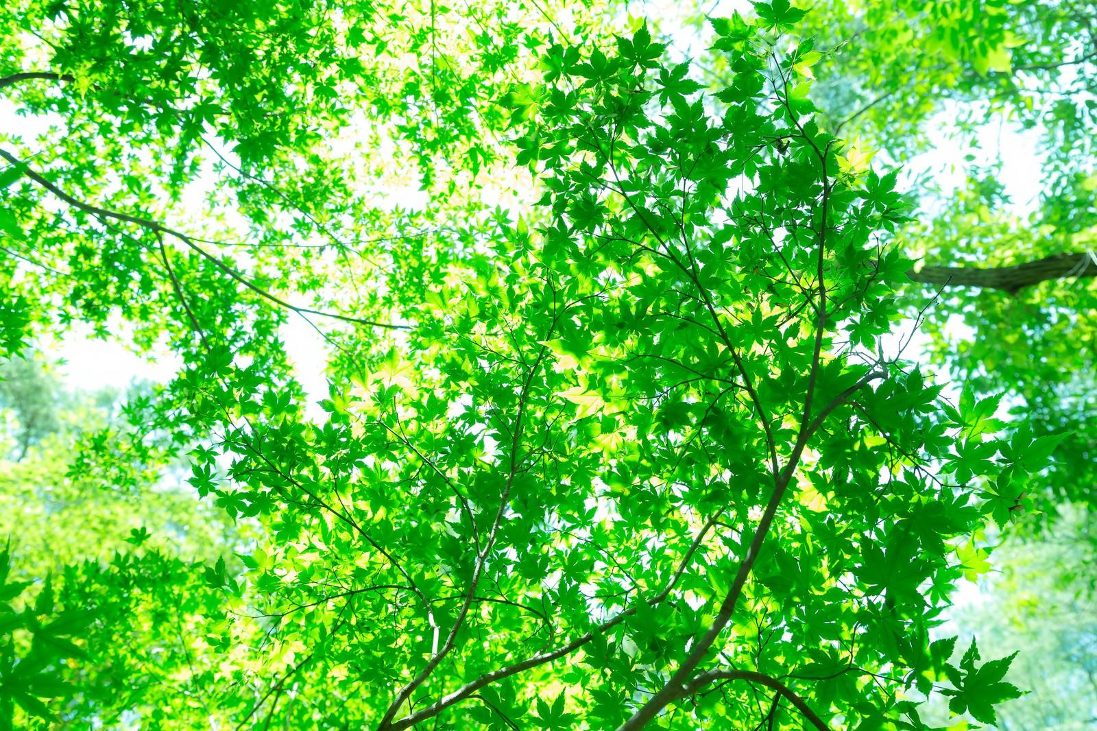 「木漏れ日の緑木漏れ日の緑」のフリー写真素材を拡大