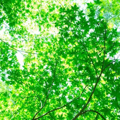 「木漏れ日の緑」の写真素材