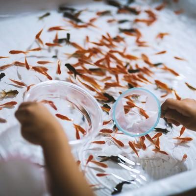 お祭りの金魚すくいの写真