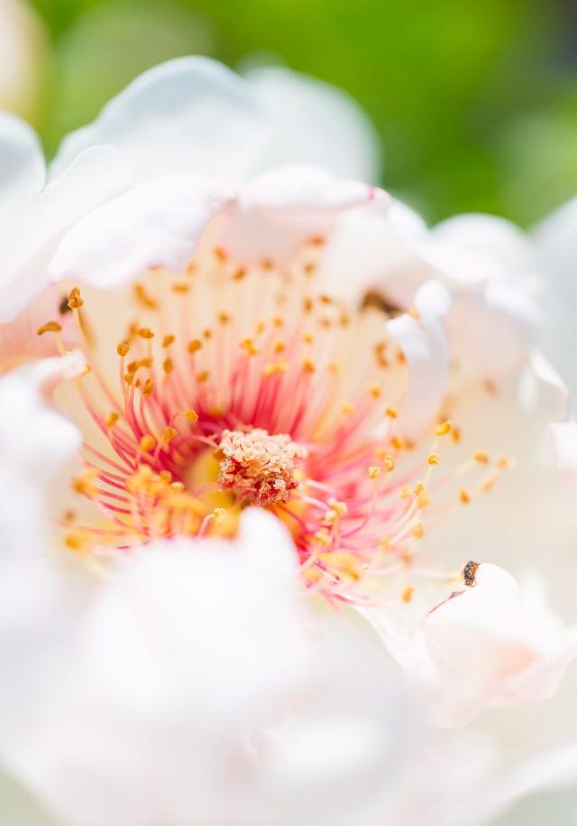 白い花と花弁の写真
