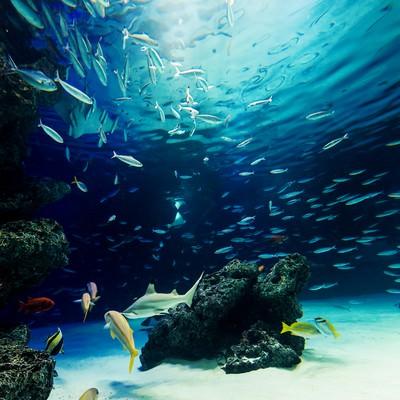 「水族館の巨大水槽」の写真素材