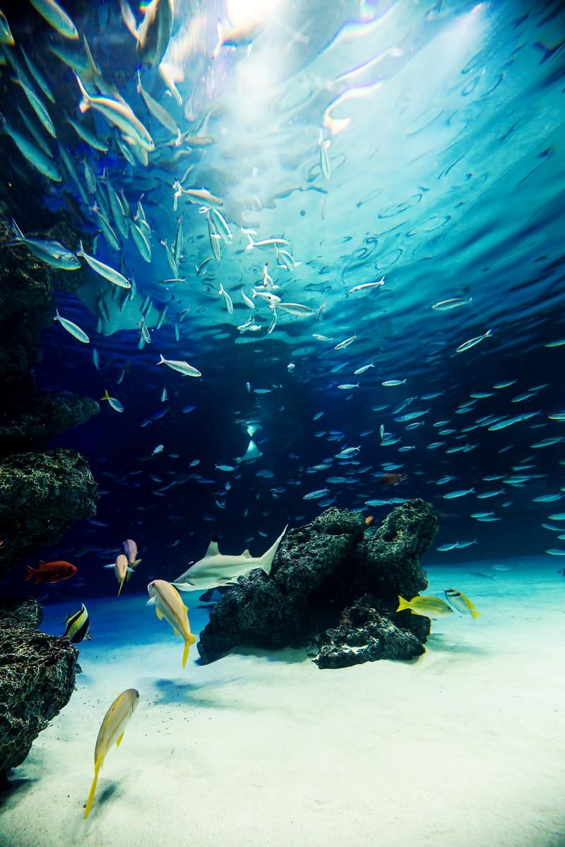 「水族館の巨大水槽」の写真