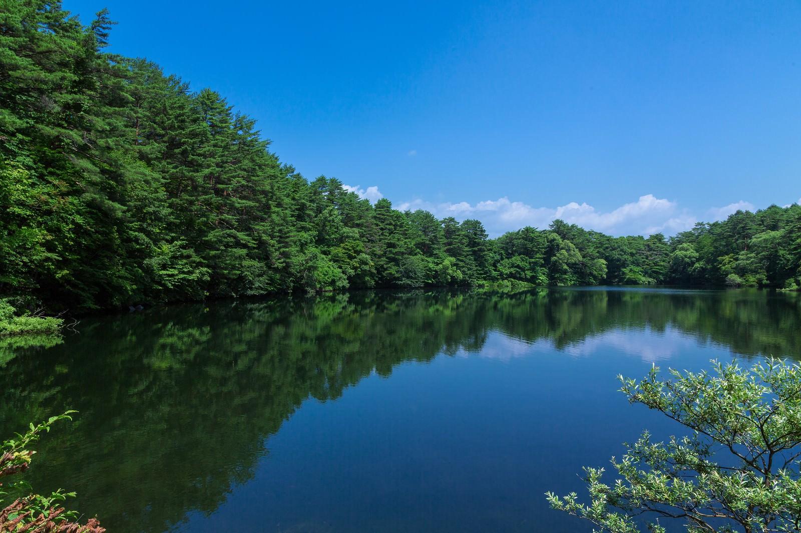 「やなぎ池(五色沼:福島) | 写真の無料素材・フリー素材 - ぱくたそ」の写真