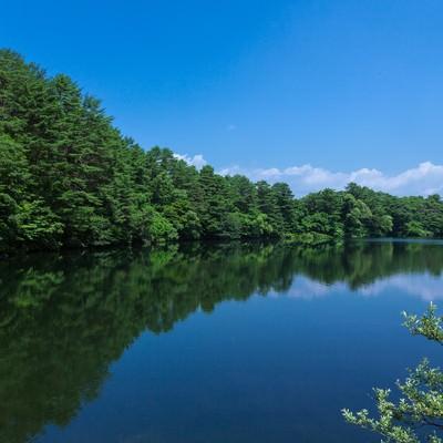 「やなぎ池(五色沼:福島)」の写真素材