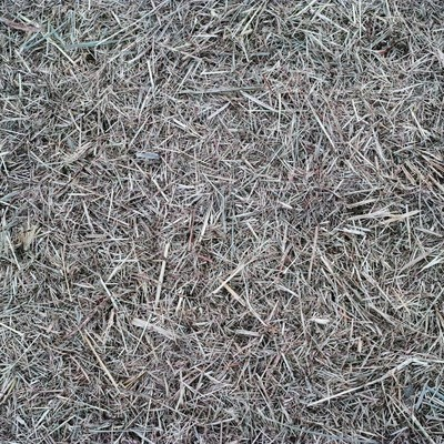 刈り取られた雑草の写真
