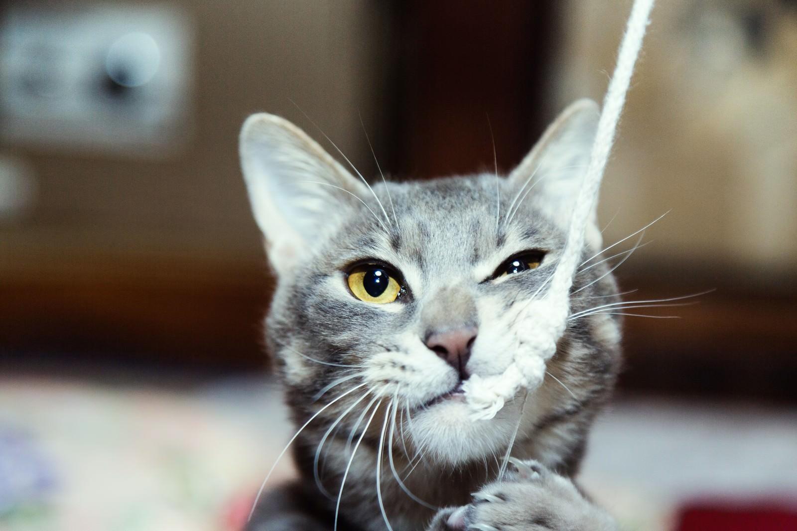 「でかい釣り針に見事釣られた猫」の写真