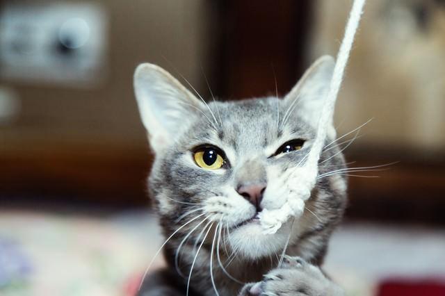 でかい釣り針に見事釣られた猫の写真