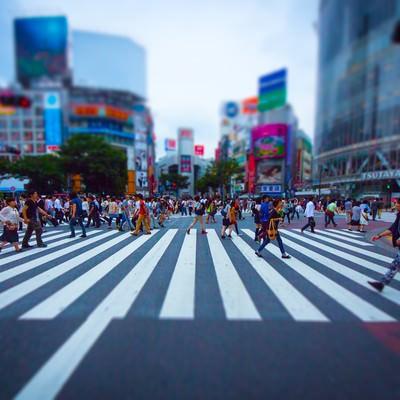 渋谷のスクランブル交差点(チルトシフト)の写真