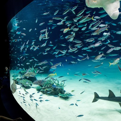 「サンシャイン水族館の巨大水槽と見上げる子供」の写真素材