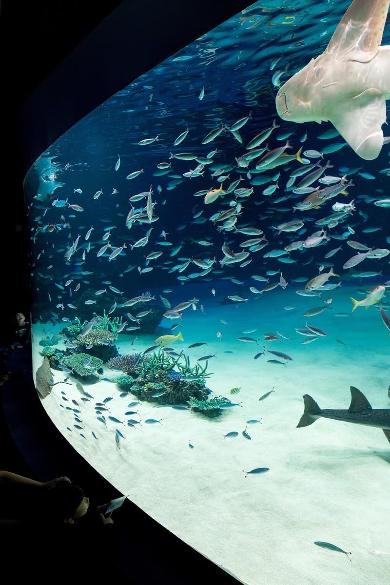「サンシャイン水族館の巨大水槽と見上げる子供」の写真