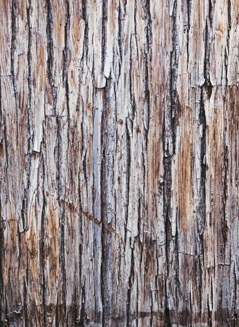 「何枚も張り合わされた樹皮(テクスチャ)」の写真