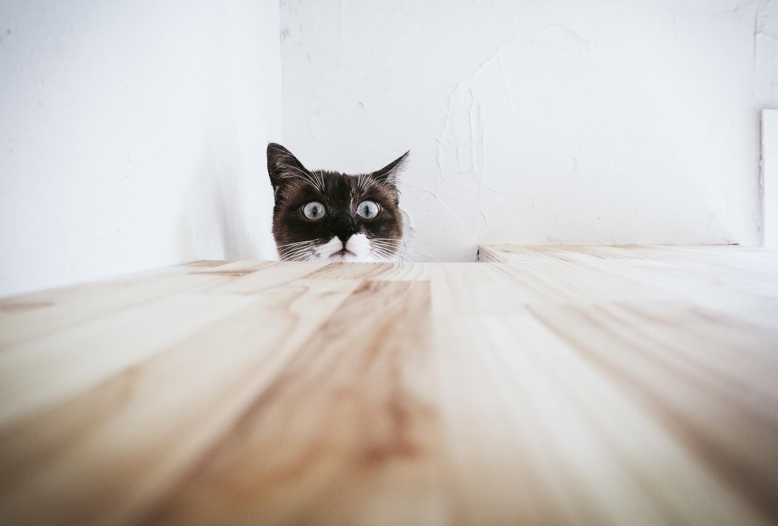 「恐る恐る上を覗き見るキャッツ」の写真