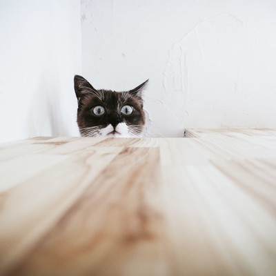 「恐る恐る上を覗き見るキャッツ」の写真素材