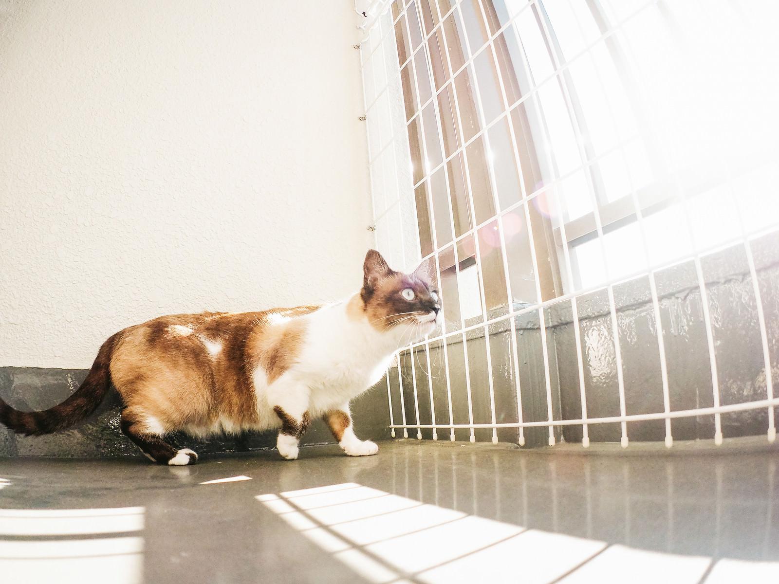 「ベランダから猫が逃げないようにする脱走防止」の写真