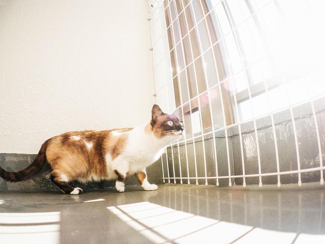 ベランダから猫が逃げないようにする脱走防止の写真