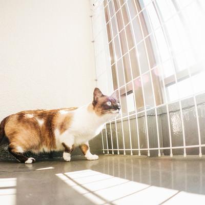 「ベランダから猫が逃げないようにする脱走防止」の写真素材