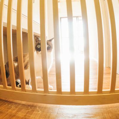 「脱走防止扉の前で怯える猫」の写真素材