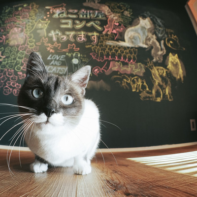 「猫好きコンペ」の写真素材