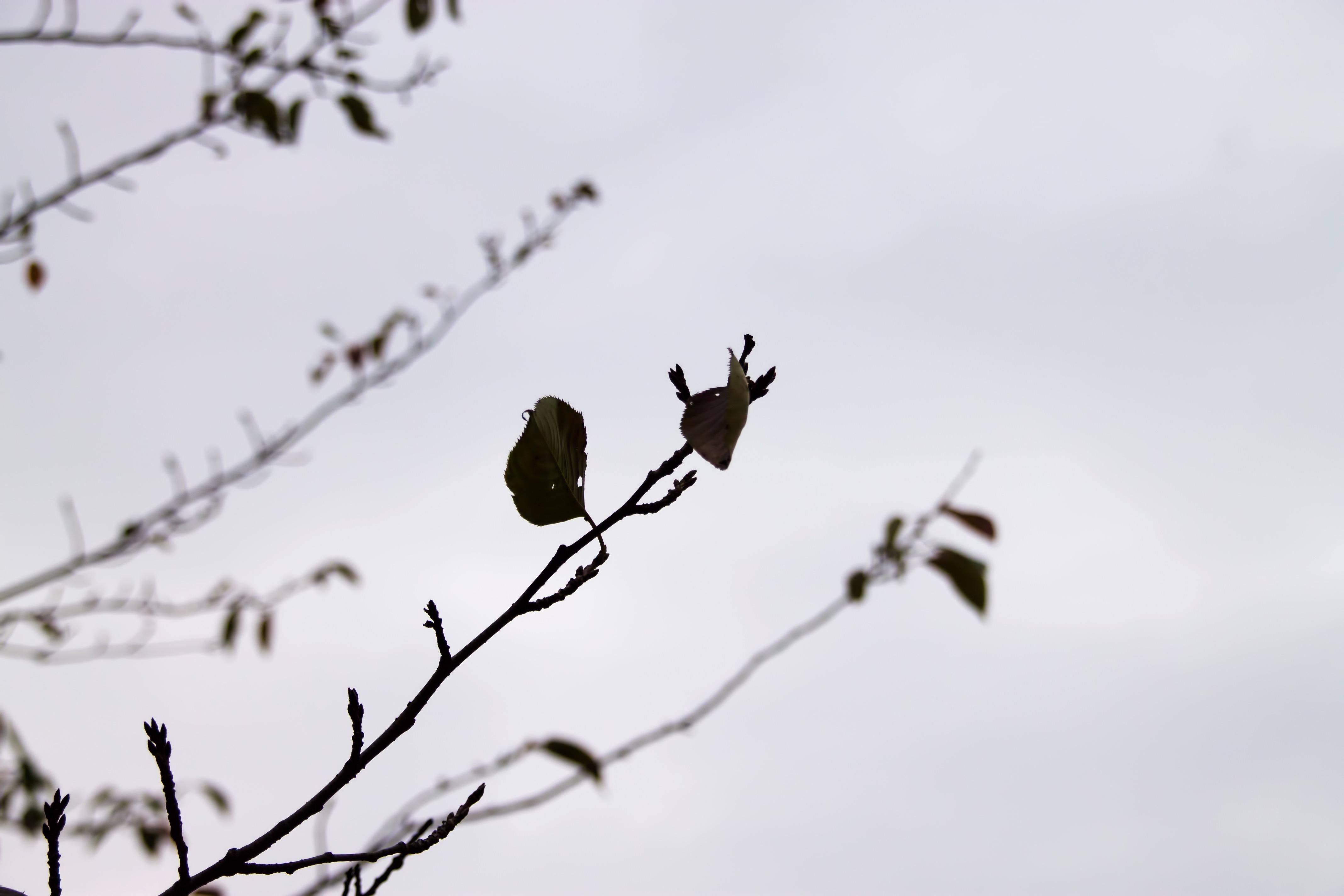 「寒い日 秋 画像フリー」の画像検索結果