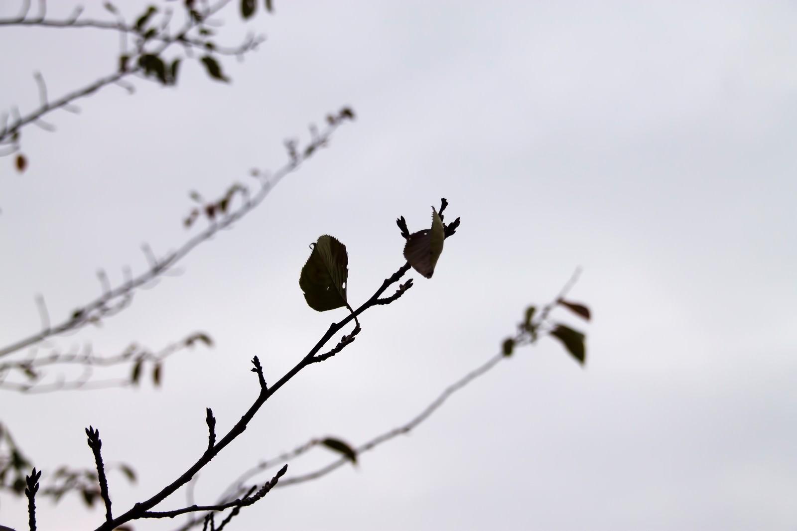 「秋の曇り空と枯葉」の写真