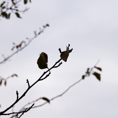 秋の曇り空と枯葉の写真