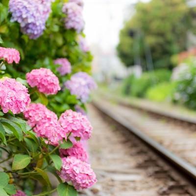 線路沿いの紫陽花の写真