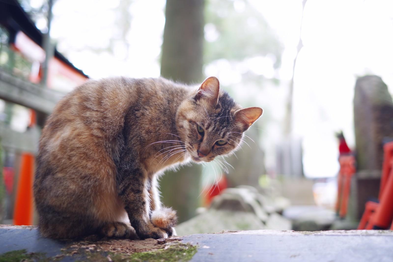 「こちらの様子を伺う野良猫」の写真