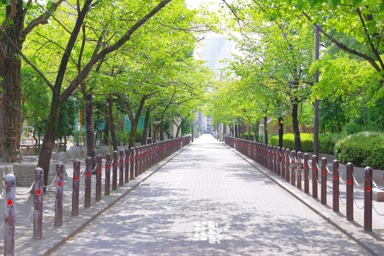 「新緑に囲まれた沿道」の写真