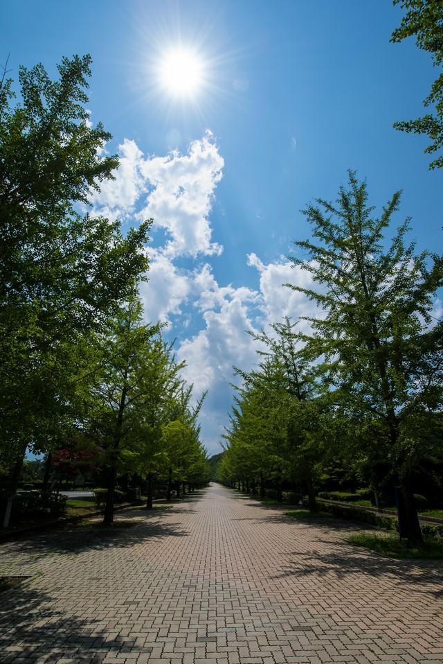 真夏の日差しと並木の写真