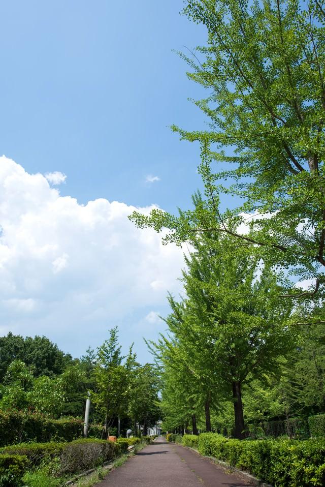 並木と遊歩道の写真