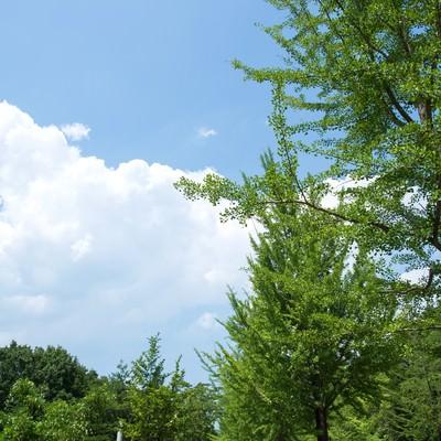 「並木と遊歩道」の写真素材