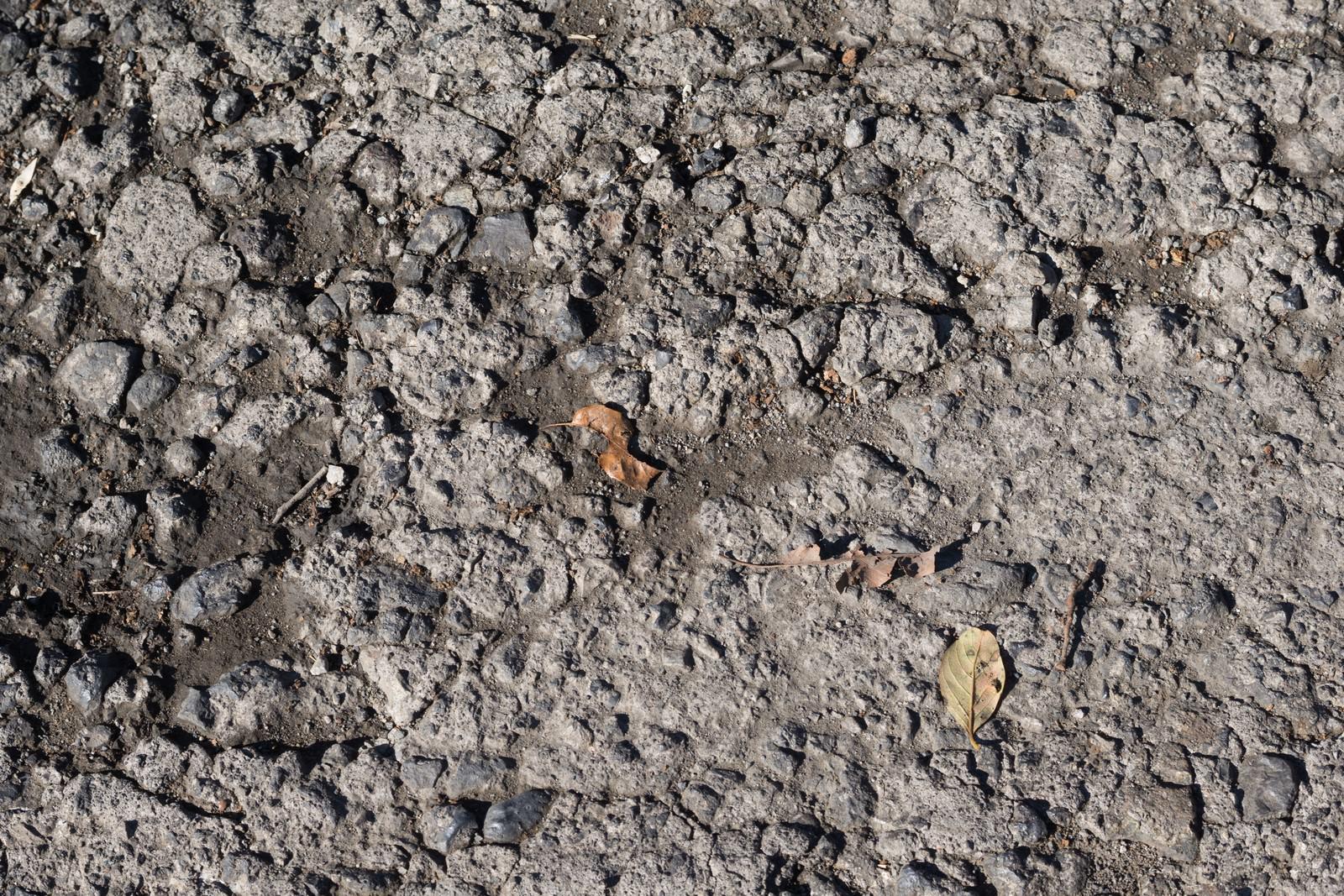 「かわいたばかりの土」の写真