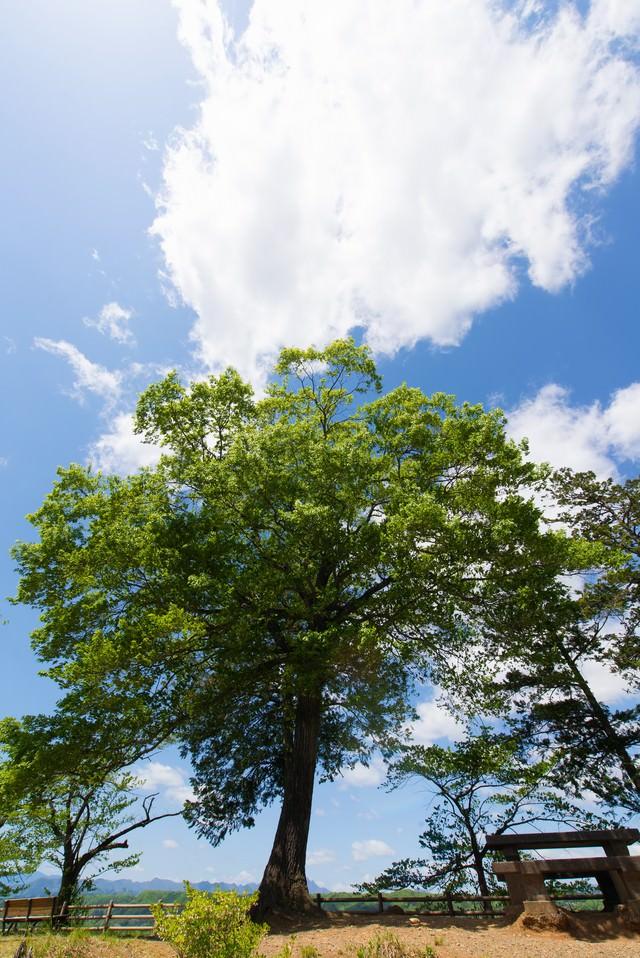 陽気な空と公園の木の写真