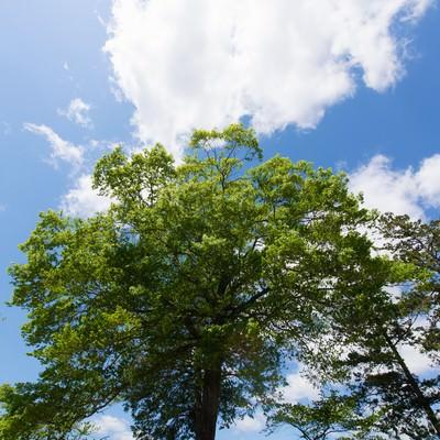 「陽気な空と公園の木」の写真素材