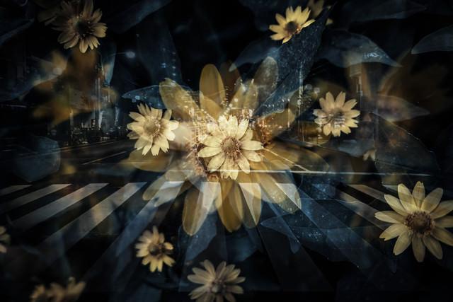 横断歩道と花(フォトモンタージュ)の写真