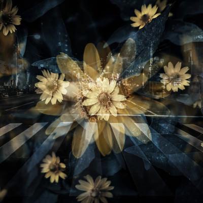 「横断歩道と花(フォトモンタージュ)」の写真素材