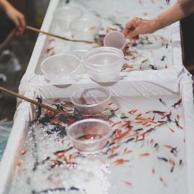 「屋台の金魚すくい」の写真素材