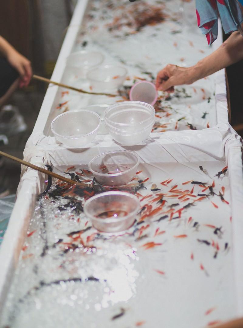「屋台の金魚すくい」の写真