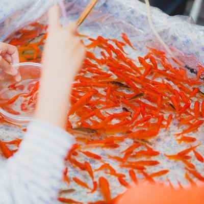 夏祭りの金魚すくいの写真