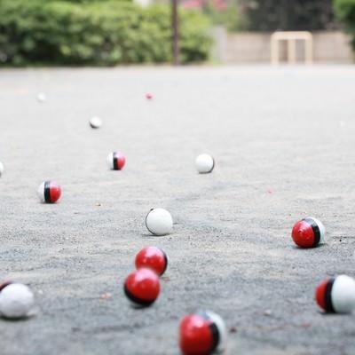 相棒を連れて紅白ボールが公園に集まってきたのフリー素材