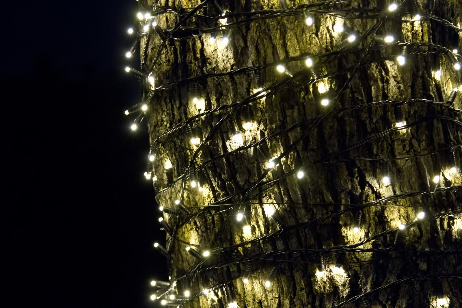 「木に巻きつく電飾」の写真