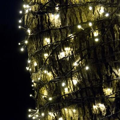 「木に巻きつく電飾」の写真素材
