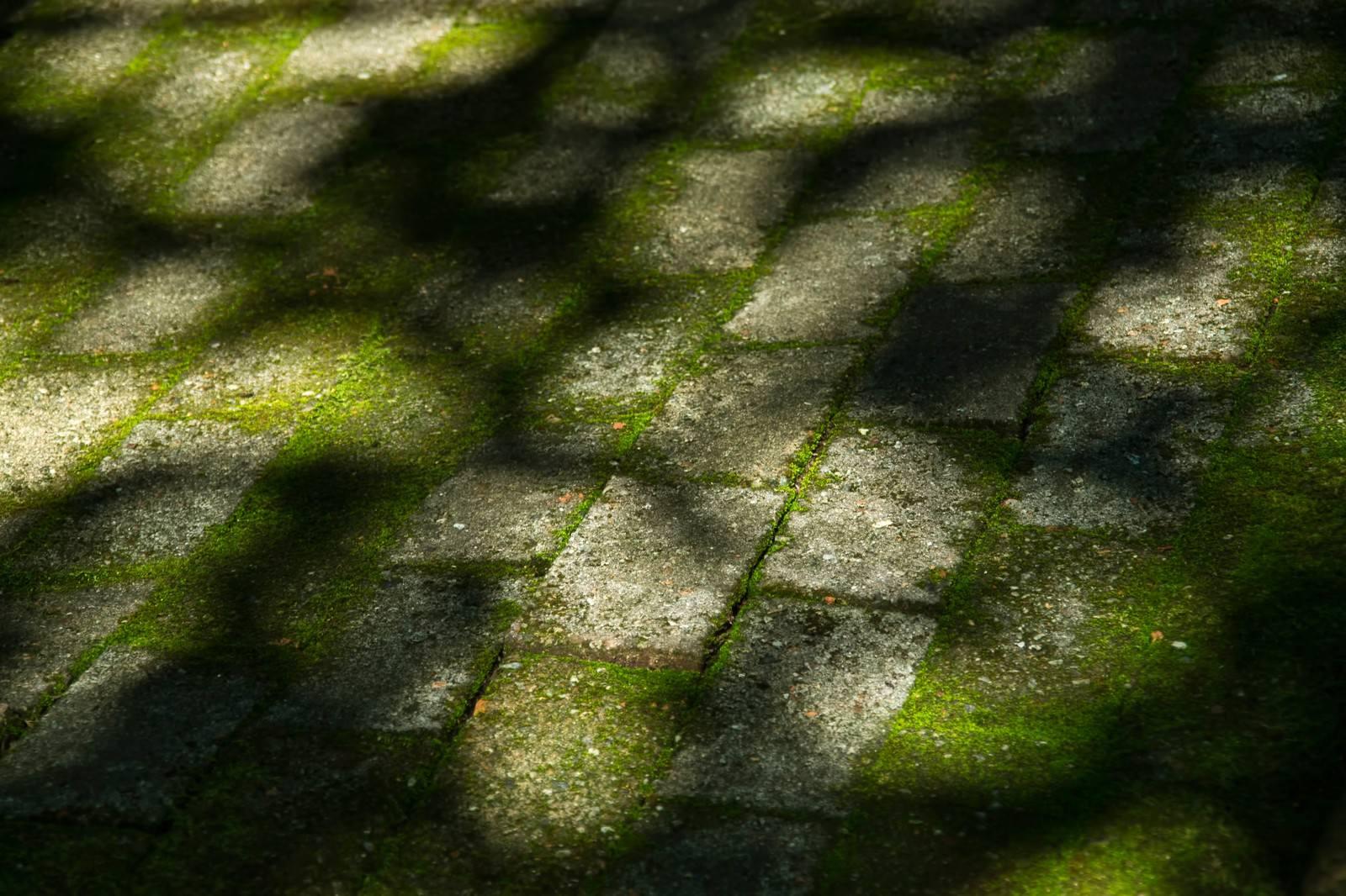 「コケのあるブロックと木漏れ日の影」の写真