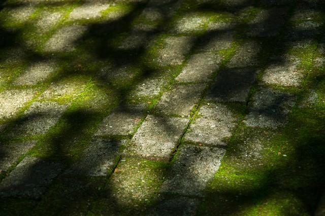 コケのあるブロックと木漏れ日の影の写真