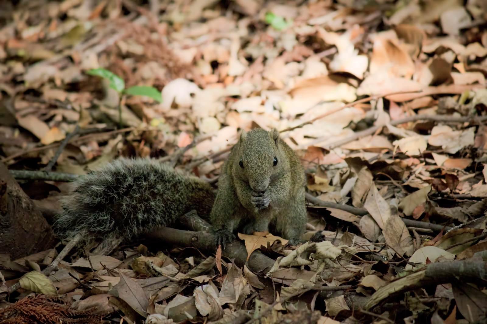 「夢中でドングリに噛りつく野生のリス | 写真の無料素材・フリー素材 - ぱくたそ」の写真