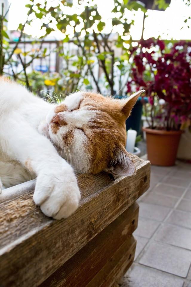 木箱の中で寝返り中の猫の写真