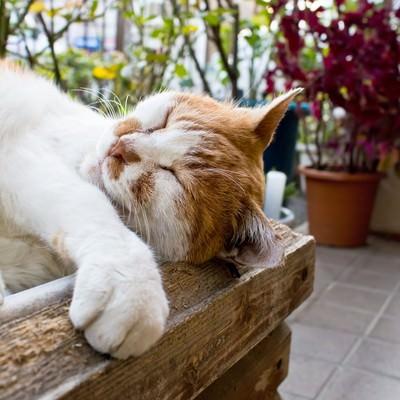 「木箱の中で寝返り中の猫」の写真素材
