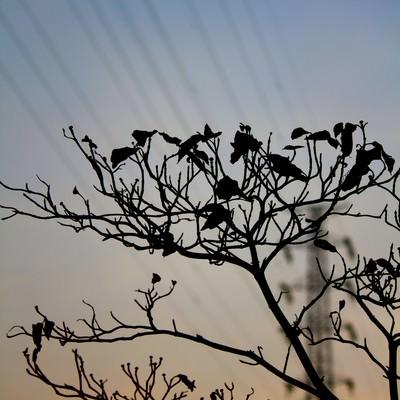 「枯れ木と鉄塔」の写真素材