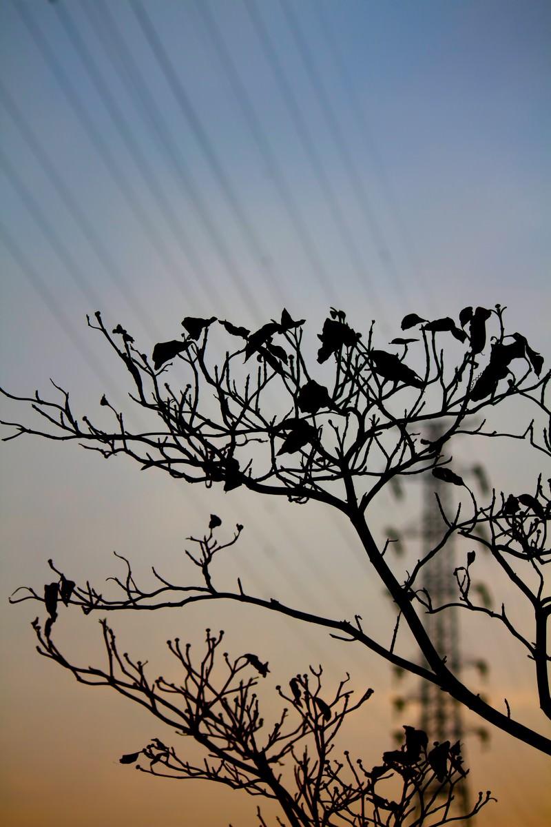 「枯れ木と鉄塔枯れ木と鉄塔」のフリー写真素材を拡大